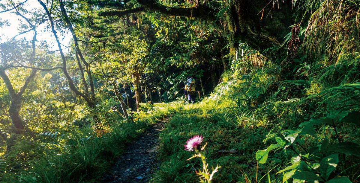 聆聽自然之歌,以步道丈量世界