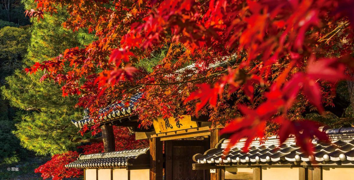 豐饒之秋,日本療癒旅行
