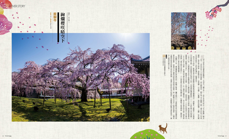 行樂京都,櫻風景 pic3